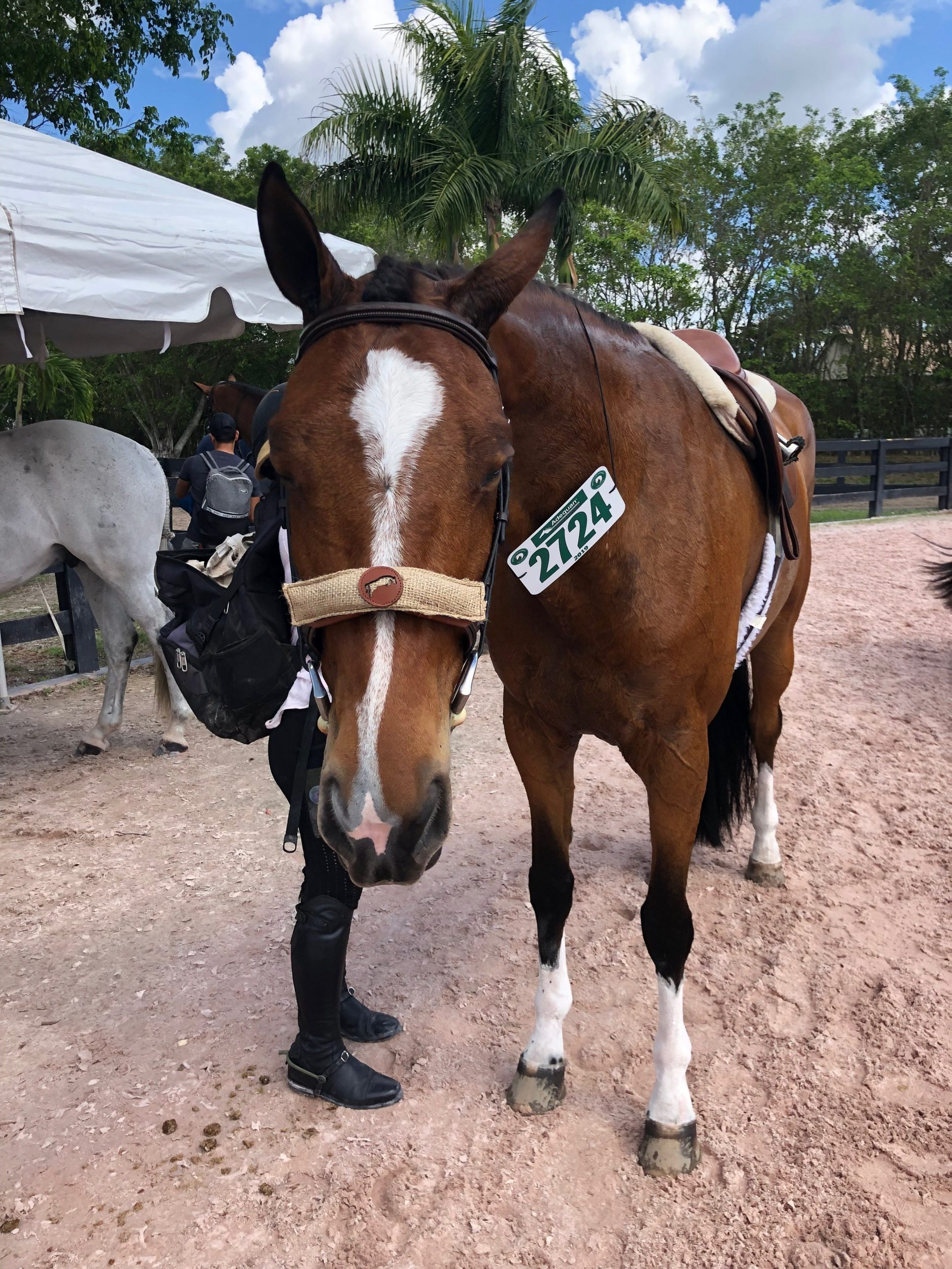 Lavender Equine Calming Scent Sac from HorseScents