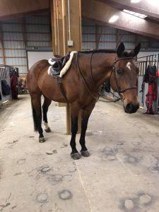 calming HorseScents wearing horse Petey