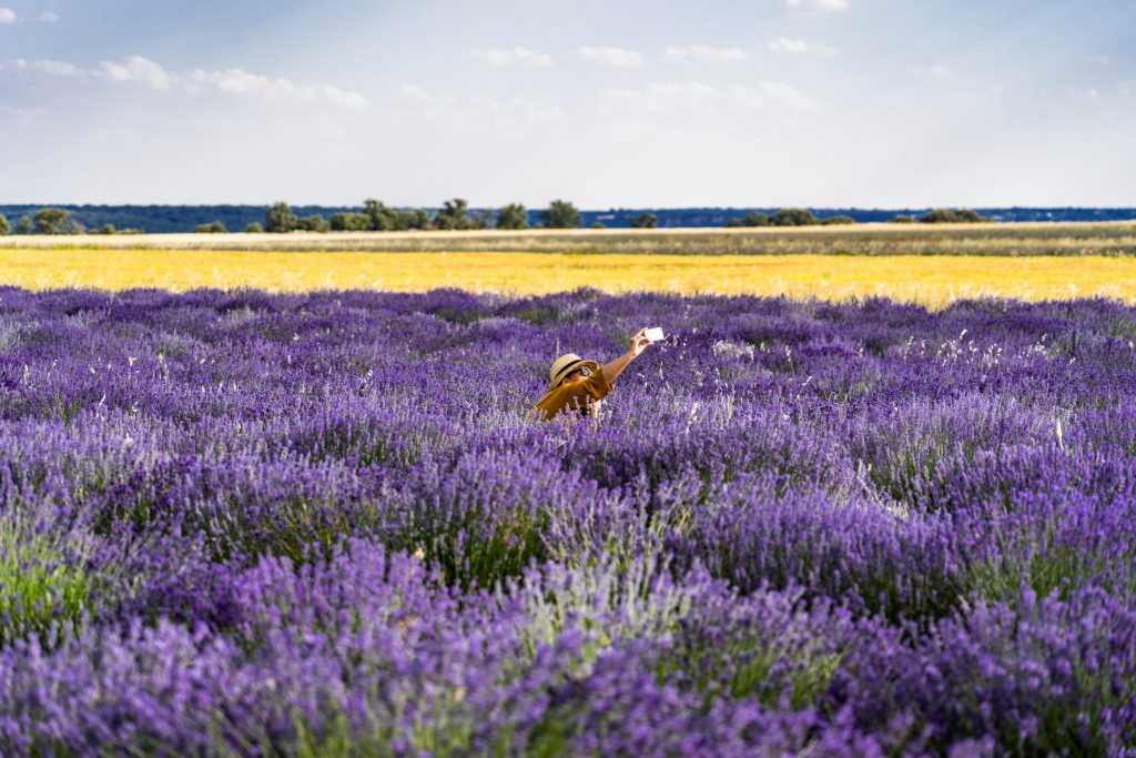 horsescents lavender field travel guide